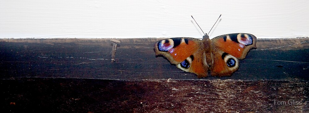 Peacock Butterfly by Tom Gliss