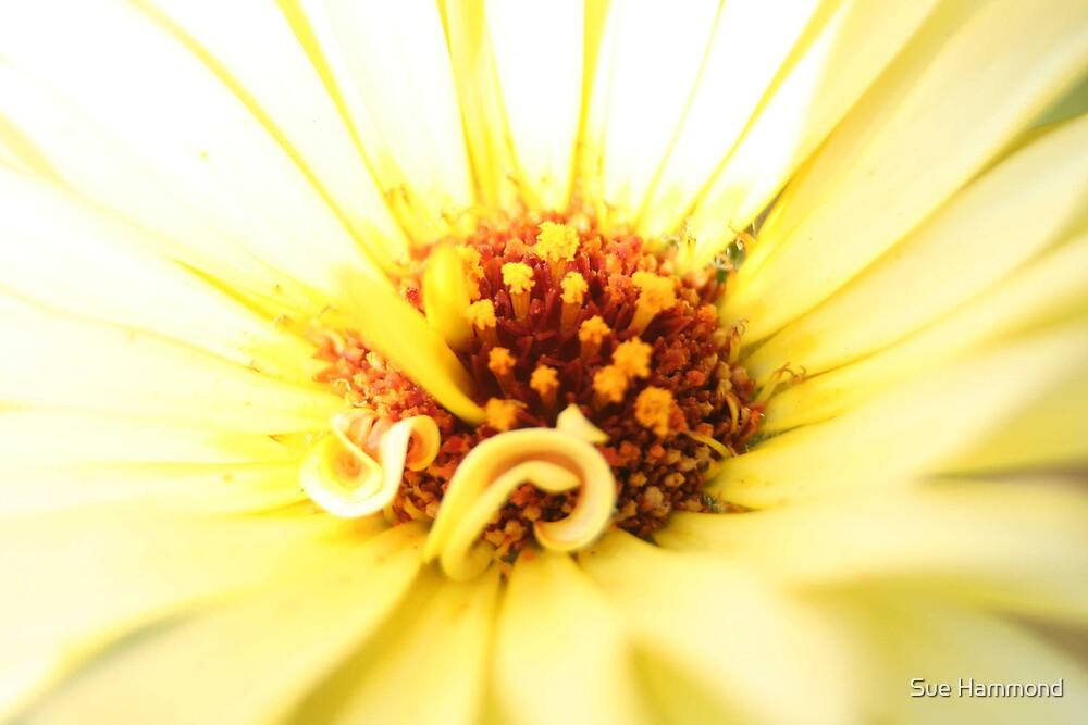 Yellow flower by Sue Hammond