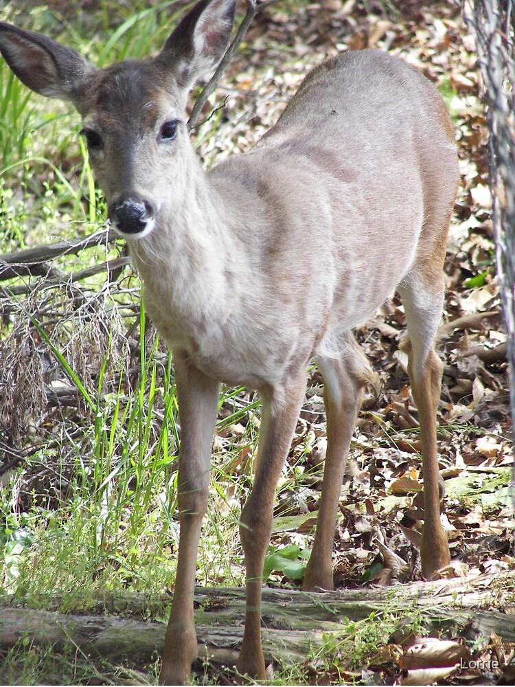 Alabama Deer by Lorrie
