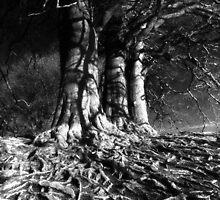 Roots by Bruce Halliburton