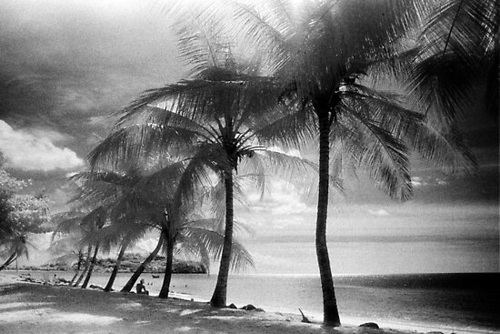 Palm Trees by Bruce Halliburton