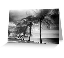 Palm Trees Greeting Card