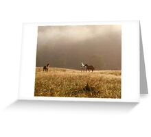 Free Horses Greeting Card