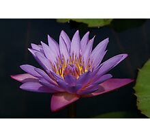 Thai Lotus Photographic Print