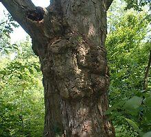 Tall Knotty Maple by Joseph Klatka