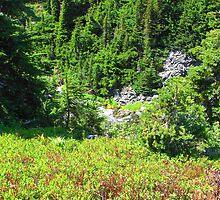 Mount Rainier 586 by jduffy111