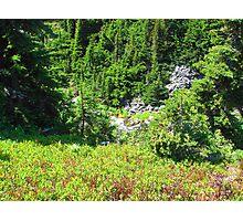 Mount Rainier 586 Photographic Print