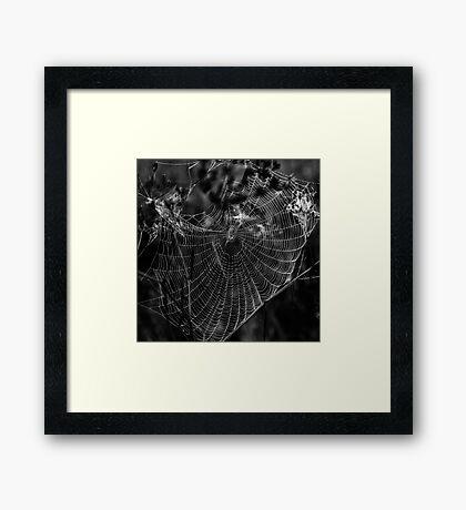 Morgentau am Spinnennetz Framed Print