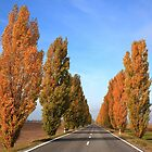 Trees on the road side by zumi