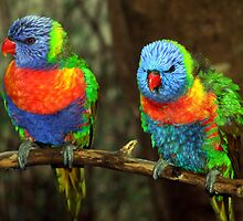 Pair Lorikeets by Keith Spencer