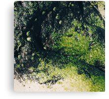 Rockpools 10 Canvas Print