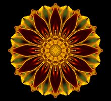 Marigold V by David Bookbinder