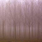 A misty morning  by annalisa bianchetti