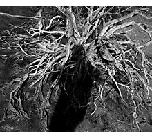 Desert Medusa Photographic Print