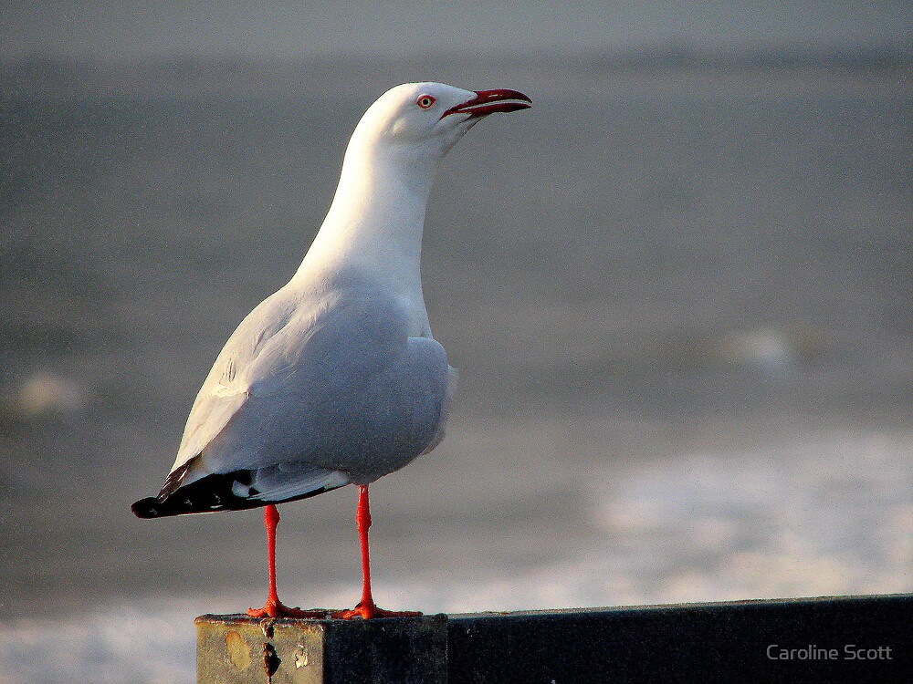 Seagull by Caroline Scott