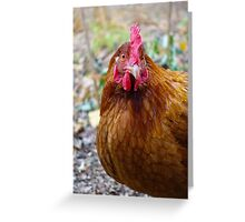 Brown Hen: late Autumn Greeting Card
