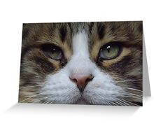 Intense Cat Face Greeting Card