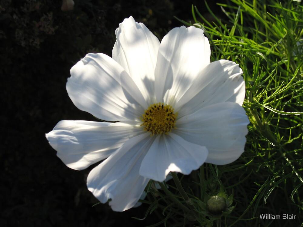 White Flower by William Blair