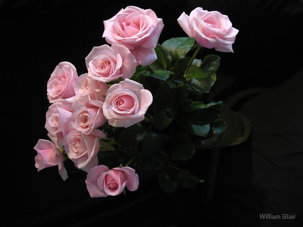Pink Roses by William Blair