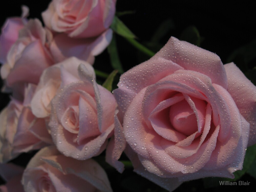Roses 3 by William Blair