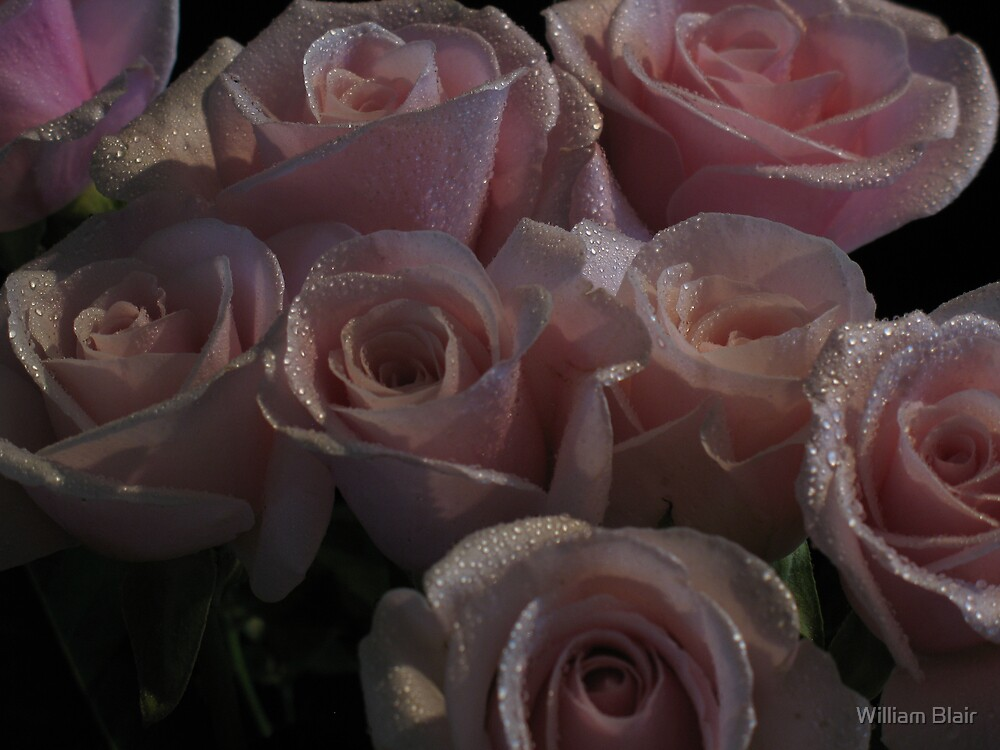 Roses 4 by William Blair