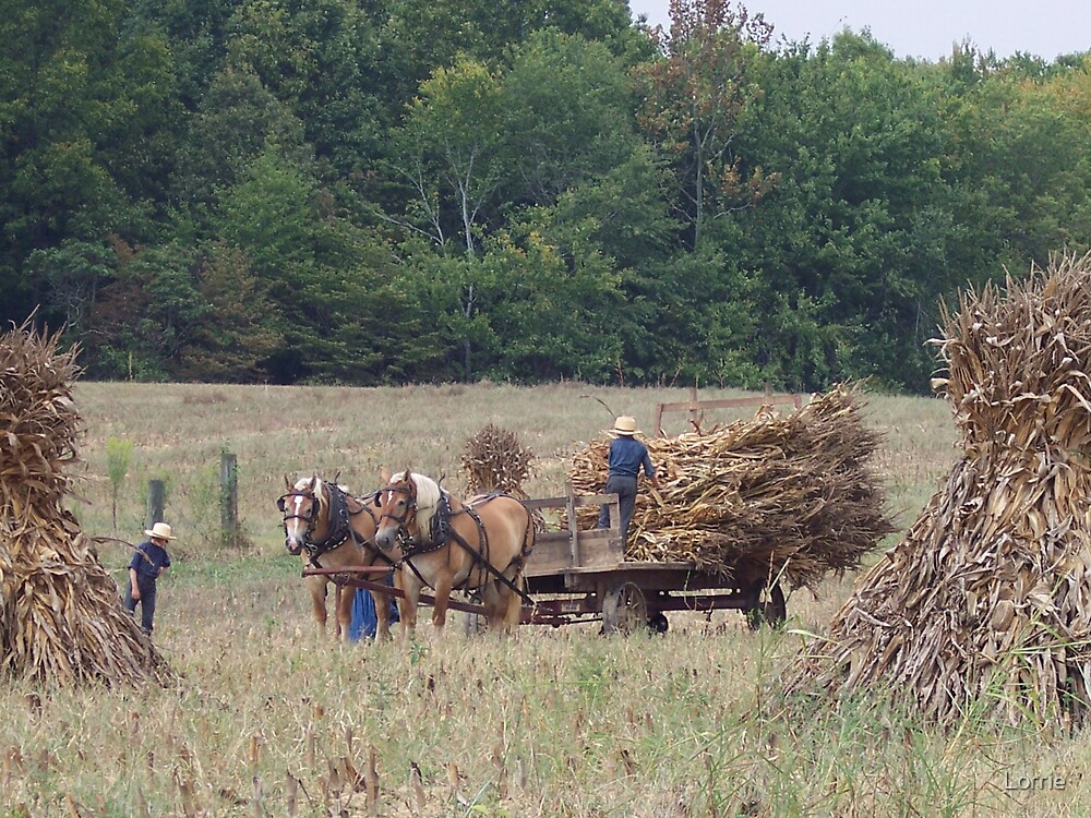 Amish Country by Lorrie