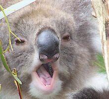 Koala by drainbrain70