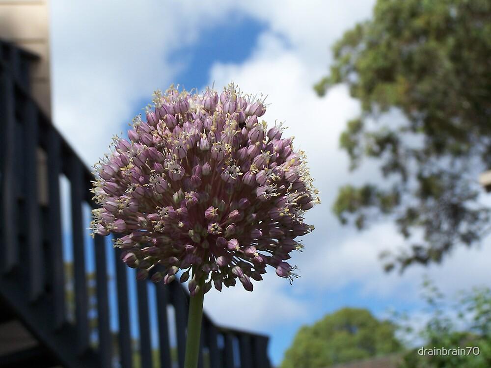 Flower by drainbrain70
