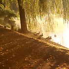 Ducks by the Lake by Sam Sneddon
