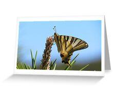 Swallowtail, Sierra Espuna Greeting Card