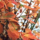 Large orange leaves by Tracey Hudd