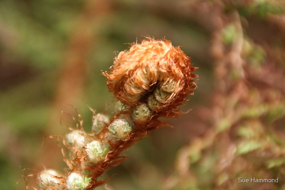 Wild fern by Sue Hammond