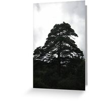 Proud Roost Greeting Card