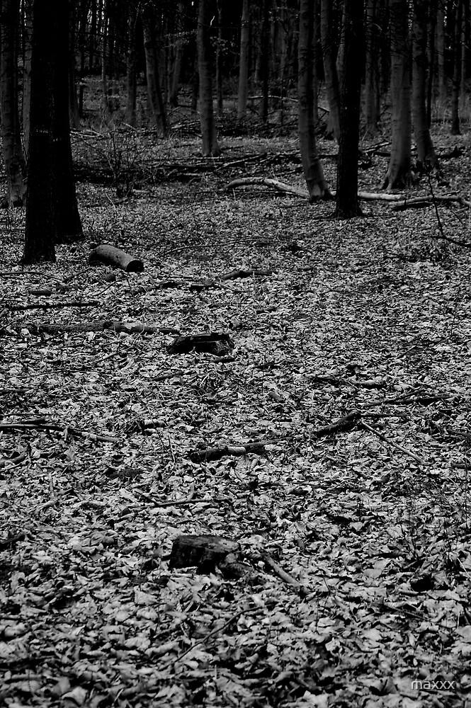 Dark woodland floor. by maxxx