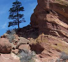 Red Rocks by Sharon Ulrich