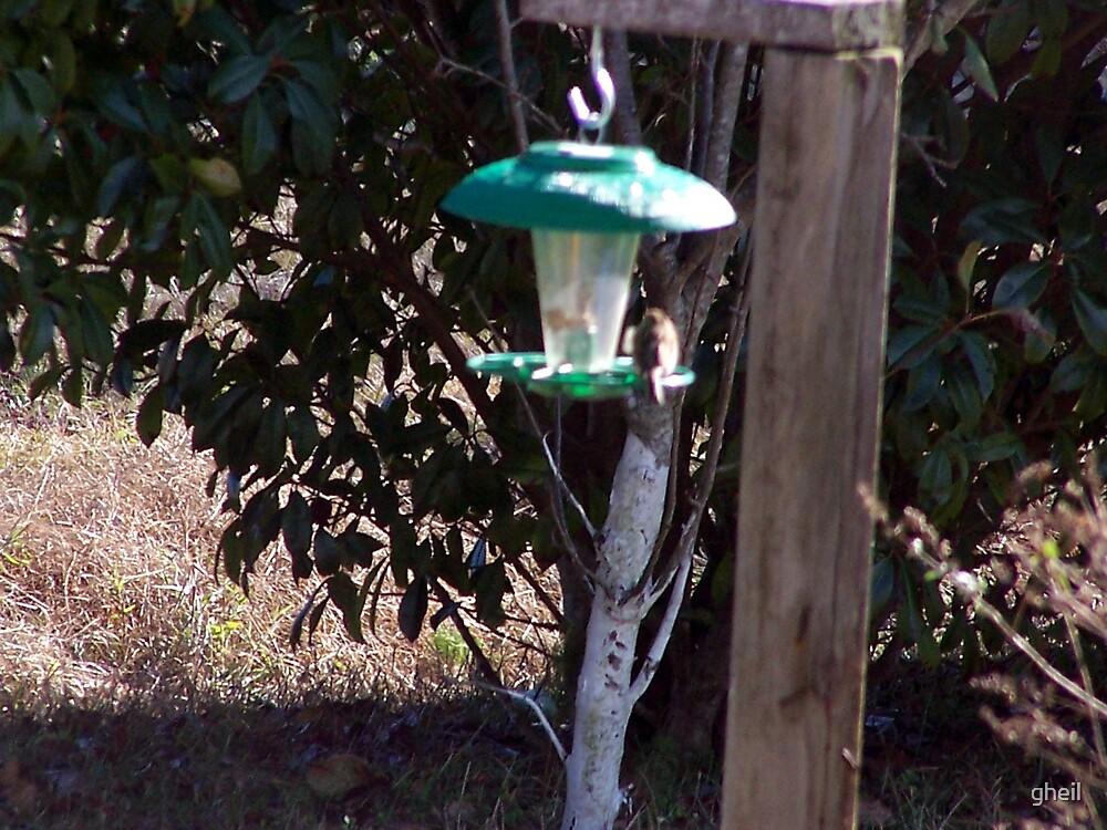 Bird Feeding by gheil