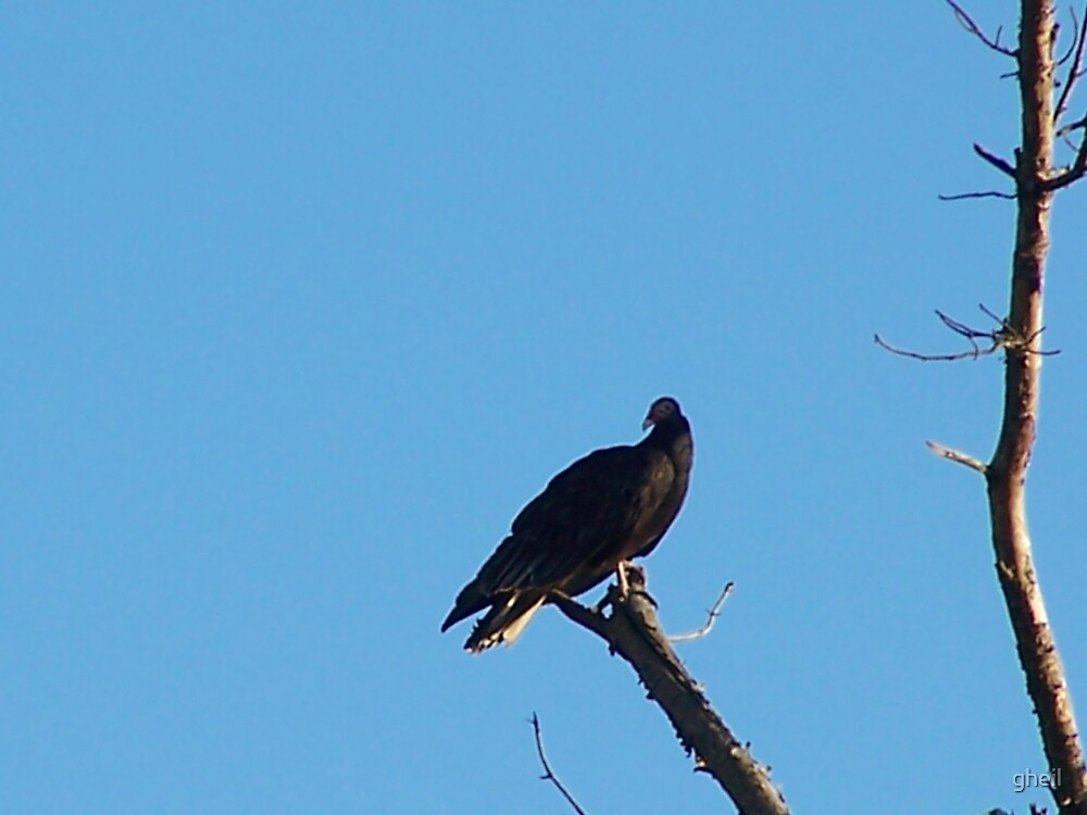 Bird perched on dead tree by gheil