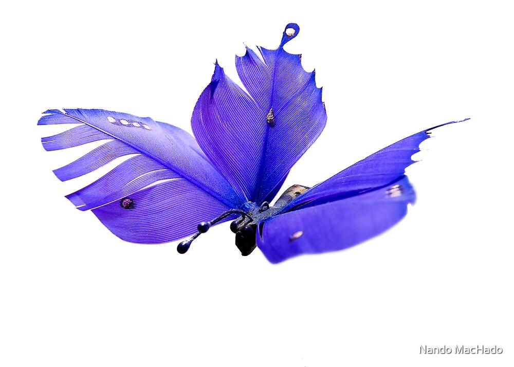 Jonathan Livingstone Butterfly by Nando MacHado