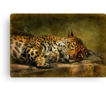 Wake Up, Sleepyhead!! Canvas Print