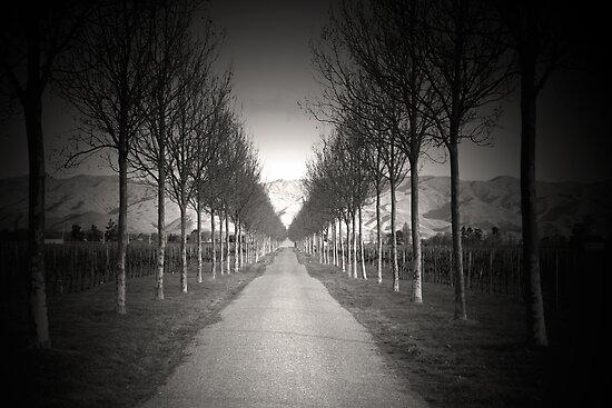 walk this way! by studiofascino