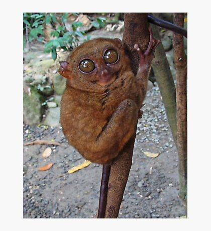 Tarsier Photographic Print