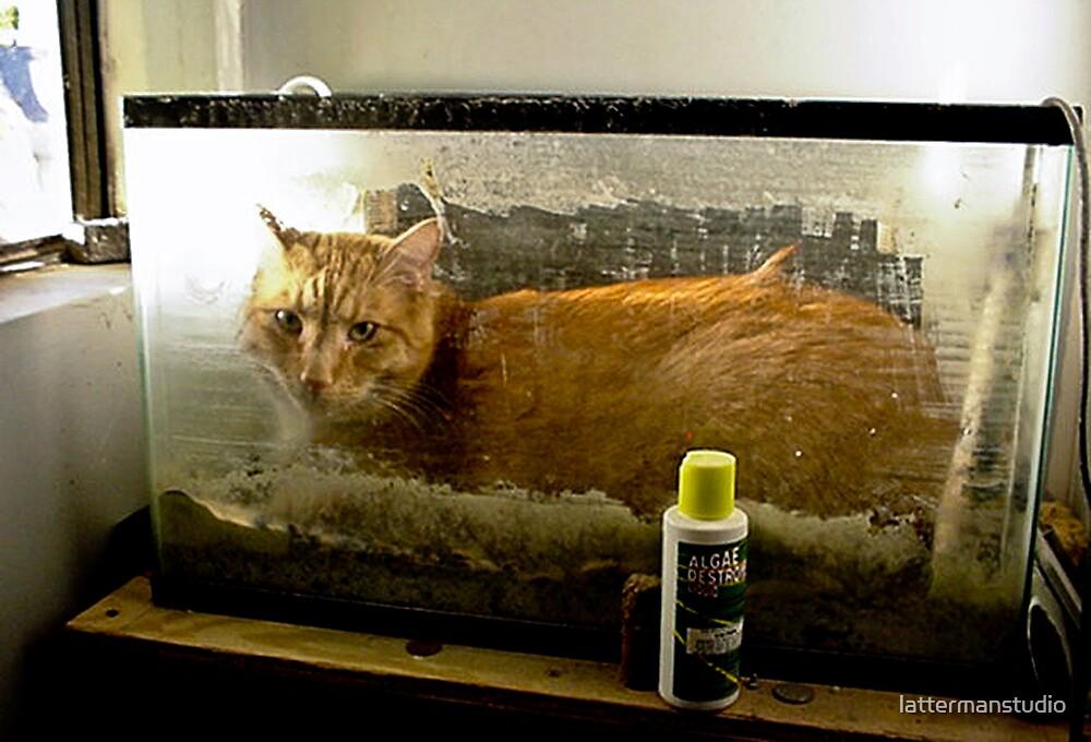 Happy Cat by lattermanstudio