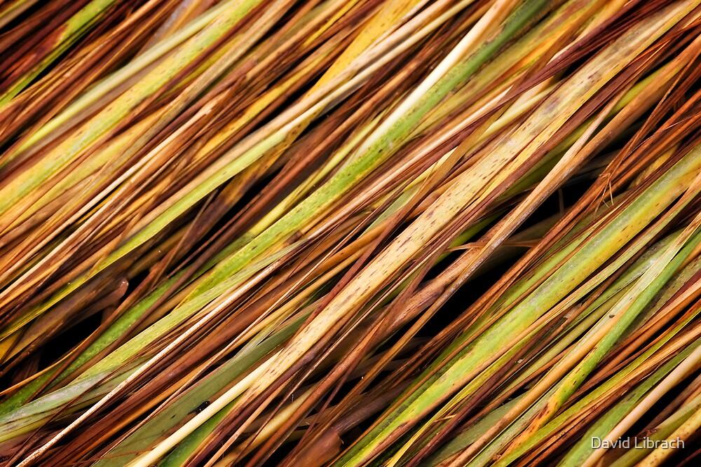 Straw by David Librach - DL Photography -