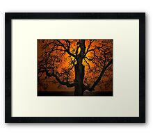 The Glow and Old Oak Framed Print