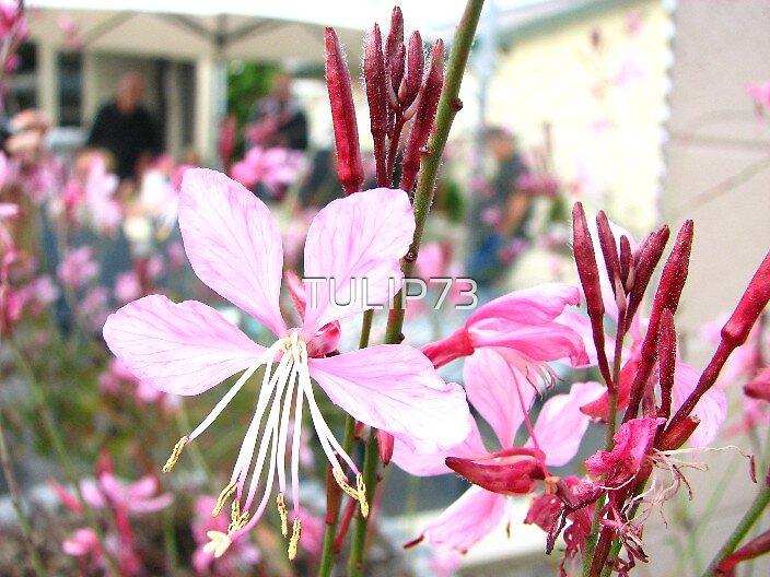 FLOWER GARDEN by TULIP73