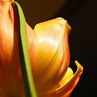 Tulip Textures 7 by ScarletSass
