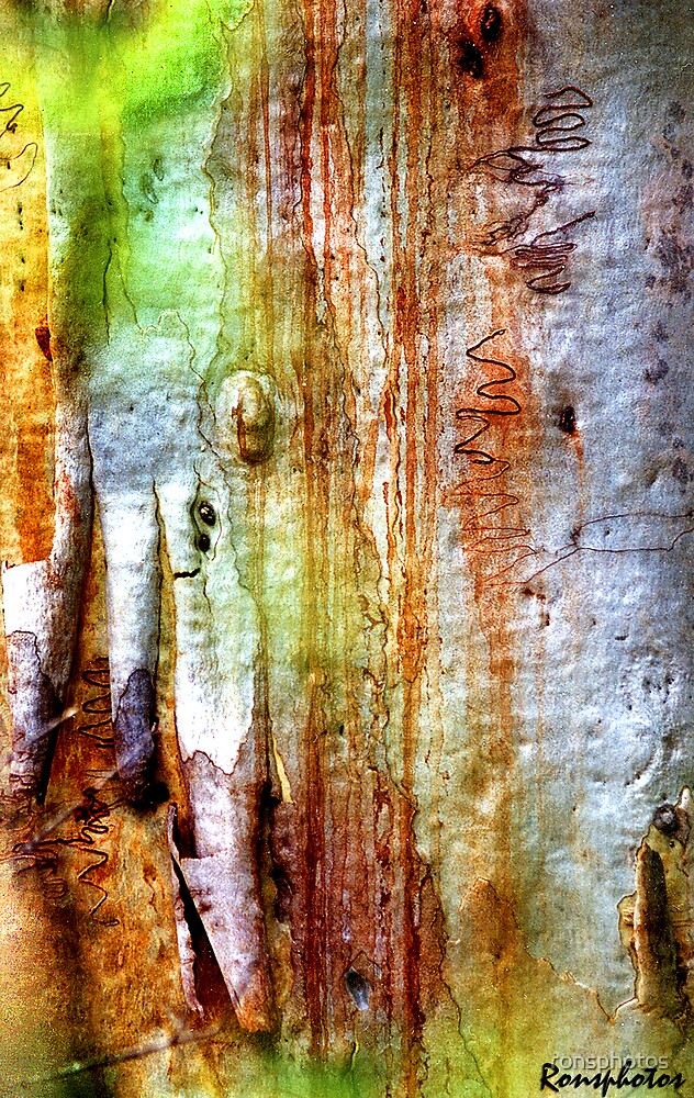 Bark: Nature's Pallet by ronsphotos