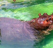 Hippo  by xxcowsrawrxx
