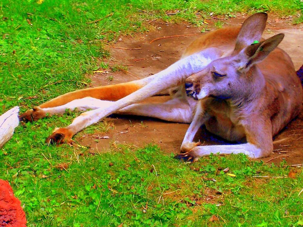 kangaroo by xxcowsrawrxx