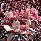 Tulip Tree by WildestArt